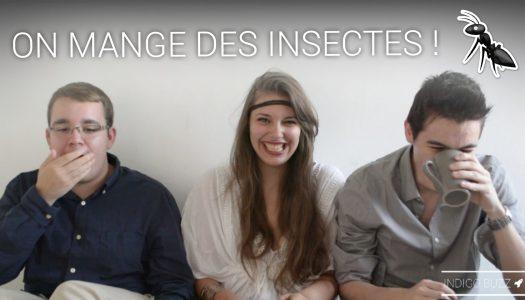 On a testé pour vous : la dégustation d'insectes !